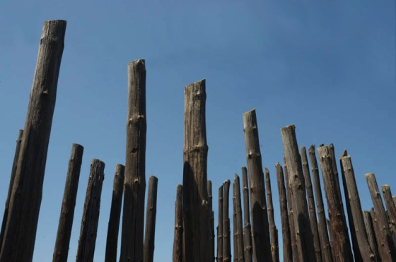 The poles of the reconstructed stockade at the native American ruins.