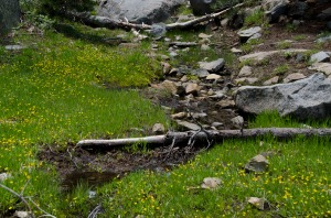 A stream along our Desolation Wilderness hike.