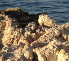 This is a detail of the tufa.