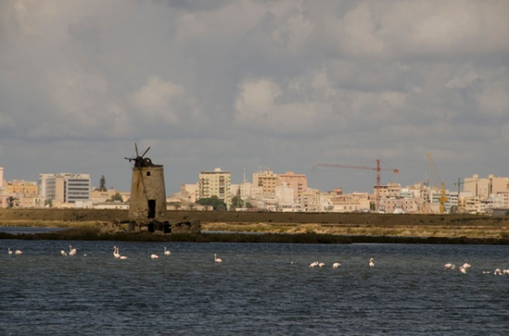 The flamingoes in the salt flats with Trapani in the background.