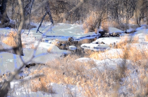 The stream in February.