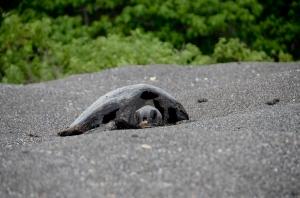 Dead sea turtle found on the beach.