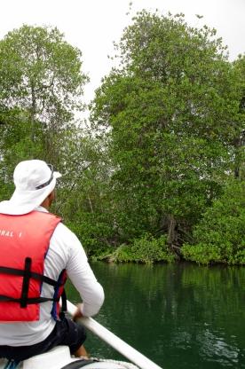 That huge tree is the black mangrove.