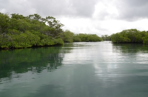 Quiet waterways among the mangroves