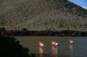 Flamingos in the lagoon