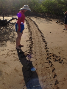 Evidence of sea turtles - recent, too!