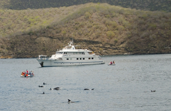 Our sister ship, Coral II in the background.  The people in the panga had quite a view of the dolphins!