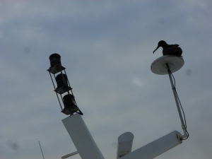 "During lunch, and basically whenever we are ""cruising,"" the frigate birds hitch a ride."