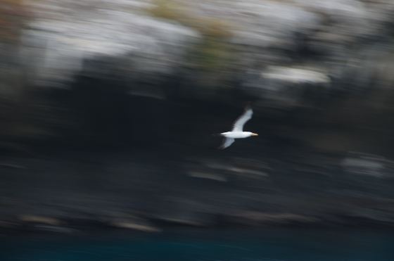 My photography instructors tell me that this type of photo can actually be quite evocative ... versus just out of focus!