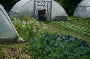 Flowers are as much a part of this farm's production as are the organic vegetables and eggs.