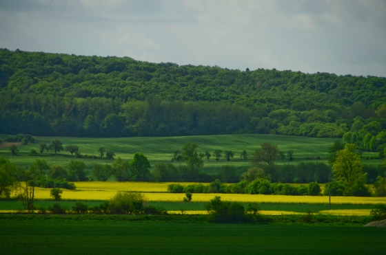 Canola fields - one of the most beautiful sights of this trip.
