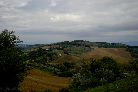 Quintessential Umbria - the soil is clumpy and plowed up for what? Winter wheat?