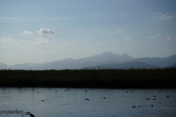 One of the marsh scenes from the Nature Park S'Albufera.