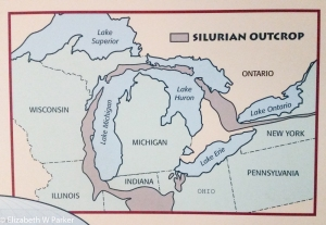From Wikipedia: The Silurian is a geologic period and system that extends from the end of the Ordovician Period, at 443.8 million years ago (Mya), to the beginning of the Devonian Period, 419.2 Mya...The base of the Silurian is set at a major extinction event when 60% of marine species were wiped out. See Ordovician-Silurian extinction events. A significant evolutionary milestone during the Silurian was the diversification of jawed and bony fish. Life also began to appear on land in the form of small, moss-like, vascular plants that grew beside lakes, streams, and coastlines, and also in the form of small terrestrial arthropods.