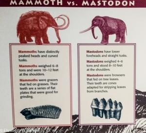 mammoth blog-120014