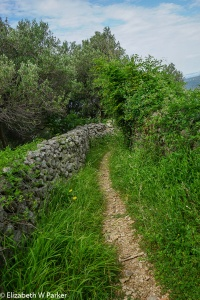 our path, along the stone walls that mark property lines.