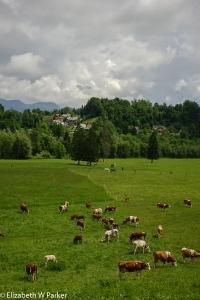 Pastoral Slovenia