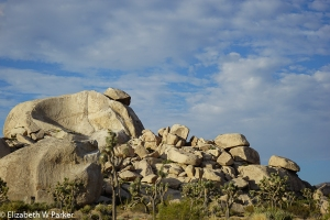 A pile of boulders... Notice the size of the Joshua trees in front of them...
