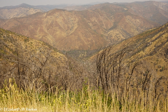 The mountains burned by the Rim Fire of 2103. It has yet to recover.