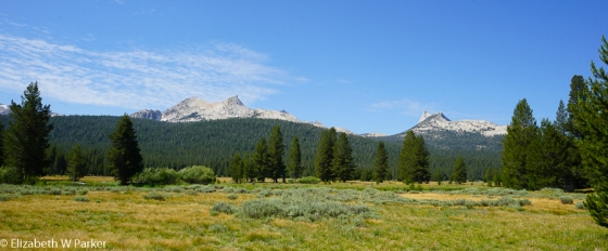 Tuolumne Meadows with the Cathedral range in the background.