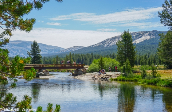 Tuolumne River in the meadow of the same name.